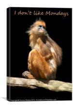 I dont like Mondays - Banded Leaf Monkey, Canvas Print
