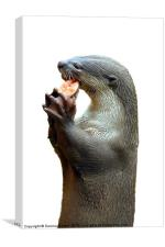 Smooth Coated Otter Eating Fish, Canvas Print
