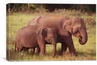 Mother and Baby Elephants Kaudulla, Sri Lanka, Canvas Print
