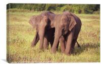 Two Elephants Kaudulla, Sri Lanka, Canvas Print