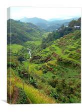 Banaue Rice Terraces, Canvas Print