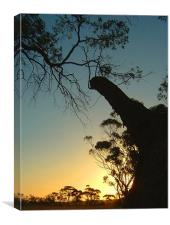 In the Trees, Western Australia Sunset, Canvas Print