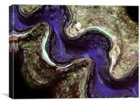 Blue Clam with Nudie Branch, Canvas Print