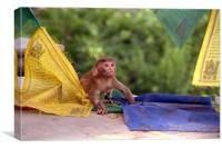 Baby Monkey Playing on Prayer Flags Swayambhu Step, Canvas Print