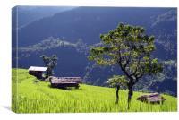 Bright Green Rice Field Nepal, Canvas Print