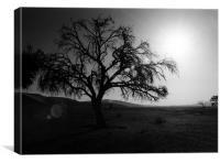 Desert Tree with Sun Flare, Canvas Print