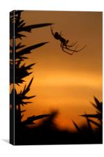 Sunset Spider, Canvas Print