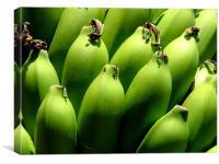Green Bananas, Canvas Print