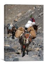 Mules Climbing Thorung La, Canvas Print