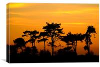 Sunset Trees, Canvas Print