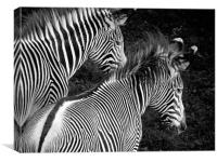 Two Zebras Together, Canvas Print