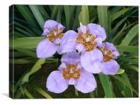 Purple Lilys
