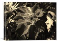 flower, Canvas Print