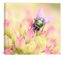 Pretty Fly, Canvas Print