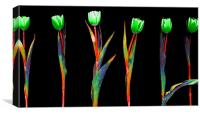 Abstract Rainbow Tulips, Canvas Print