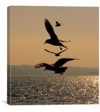 Dancing Gulls, Canvas Print