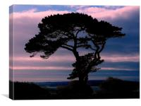 Silhouette Tree, Canvas Print
