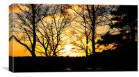 New Forest Sun, Canvas Print