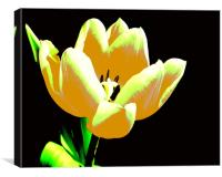 Yellow Abstract Tulip, Canvas Print