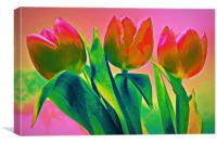 Rainbow Tulips, Canvas Print