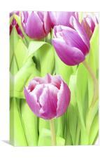 Delicate Tulips, Canvas Print