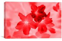 InfraRED Cherry Blossom, Canvas Print