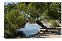 Pinewalk Puerto Pollensa, Canvas Print
