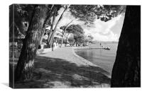 Pine Walk Puerto Pollensa, Canvas Print