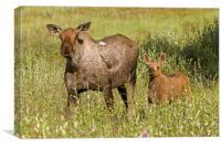 Moose, Canvas Print