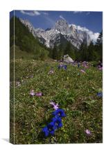 Alpine flowers, Canvas Print