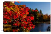 Fall colors of New Hampshire, Canvas Print