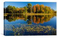 Mills Pond, Canvas Print