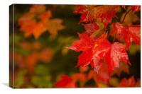Fall leaf, Canvas Print
