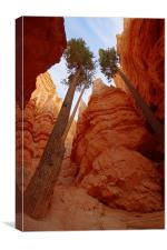 Bryce Canyon walls, Canvas Print
