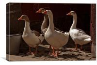 Geese, Canvas Print