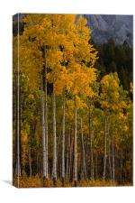 Fall colors, Canvas Print
