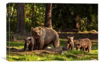 European Brown Bear, Canvas Print