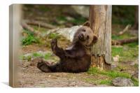 Brown bear Cub, Canvas Print