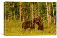 Bear dance, Canvas Print