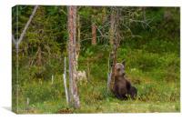 Sitting bear, Canvas Print