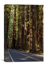 Humboldt State Park, Canvas Print