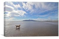 The Mournes from Tyrella Beach, Canvas Print
