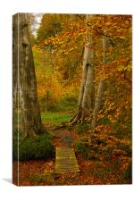 Autumn Colour, Canvas Print