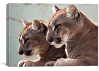 Puma or Gougar Pair, Canvas Print