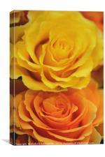 yellow roses, Canvas Print