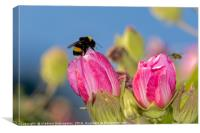 Flowers and bumblebee