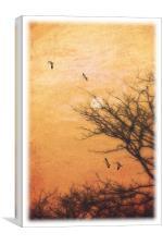 AMBER SKY, Canvas Print