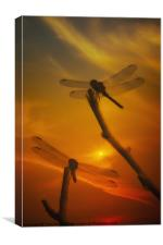 DRAGONFLYS IN THE SUNSET, Canvas Print