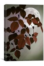 IN THE AUTUMN MOONLIGHT, Canvas Print