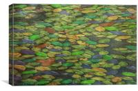 LILY PADS, Canvas Print
